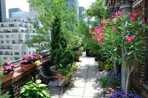 Сад на крыше