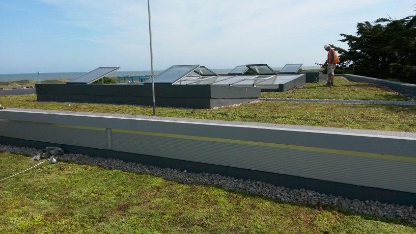 Эволюция зеленых крыш
